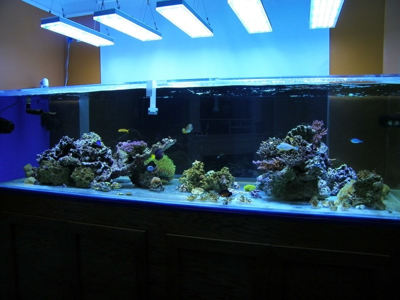 Reef Aquarium med Orphek PR-156 LED Lights
