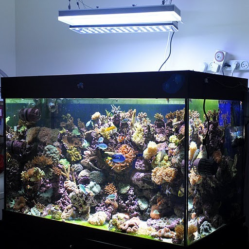 Reef Aquarium misto con orphek pr-156 luci led