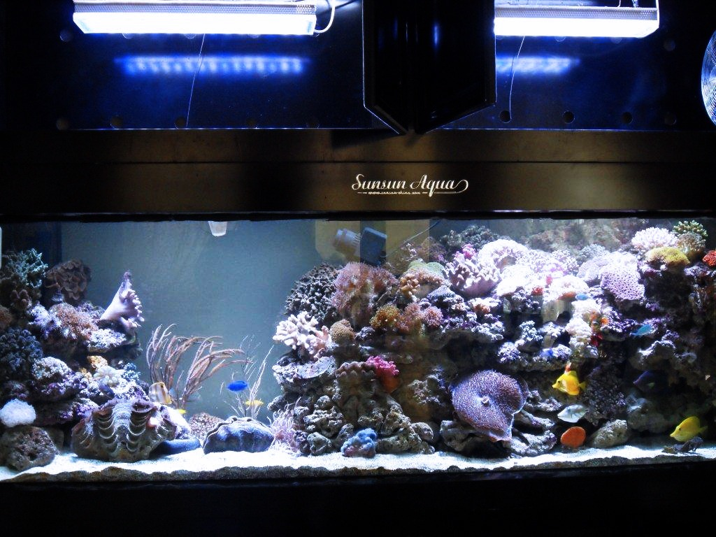 bercampur akuarium terumbu kerang orphek pr-156 dipimpin pencahayaan