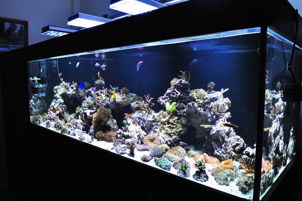 Reef Aquarium featuring Orphek PR-156 LED Aquarium Lights