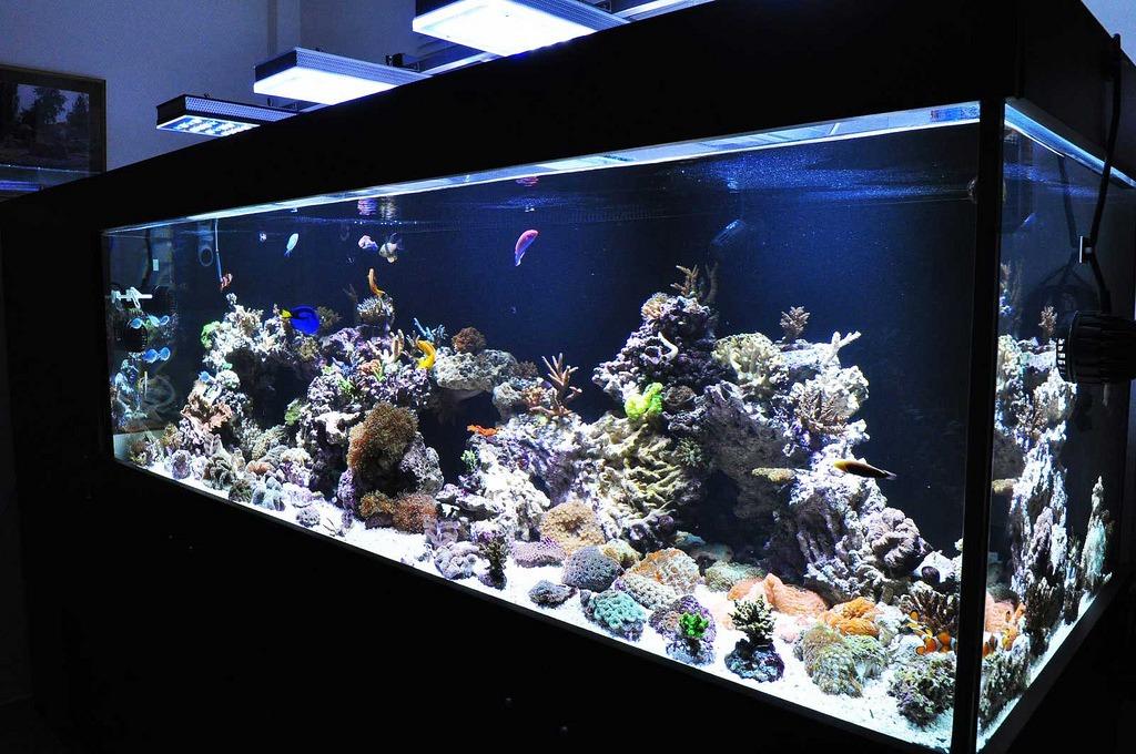 warum korallen bleichen orphek. Black Bedroom Furniture Sets. Home Design Ideas