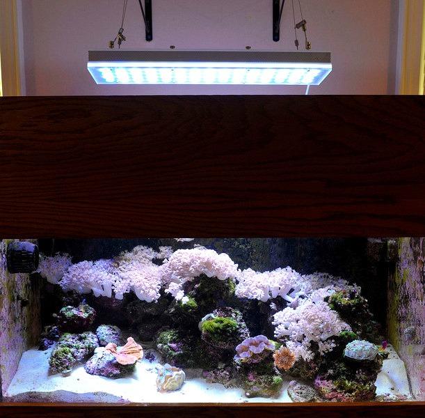 terumbu karang lembut akuarium dengan orphek pr-156 dipimpin cahaya