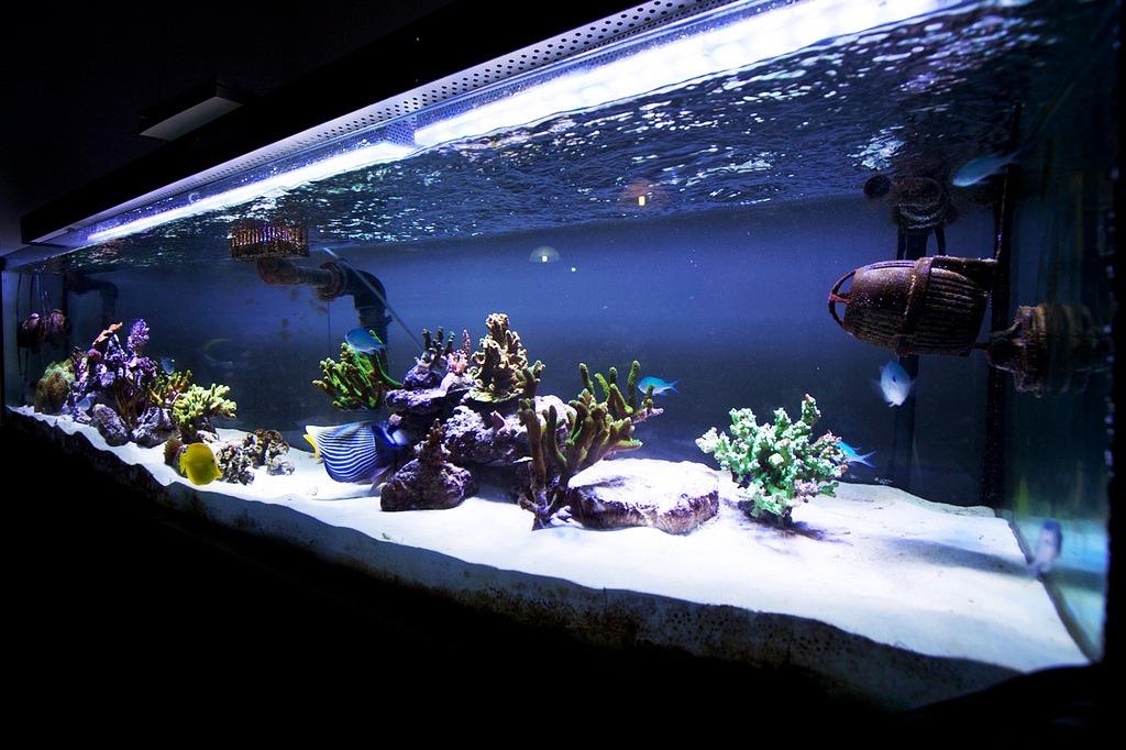 Full Tank Shot Photos with Orphek PR-156 Aquarium LED Lights