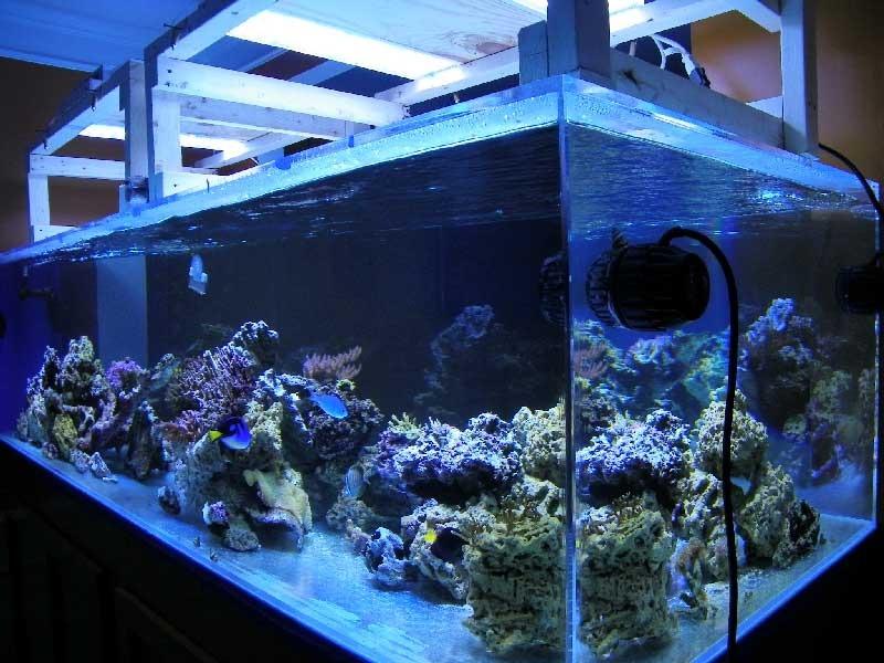 orphek വെളിച്ചം കൊണ്ട് sps reef