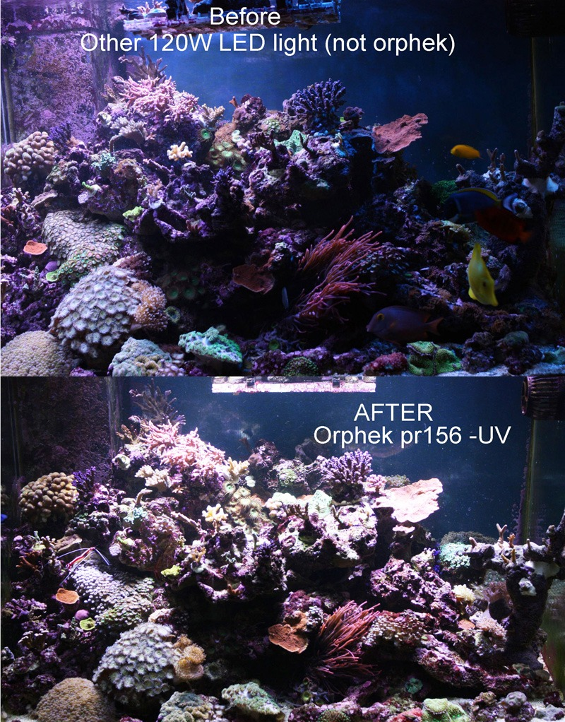orphek-pr156-uv-VS-autre-led-120w