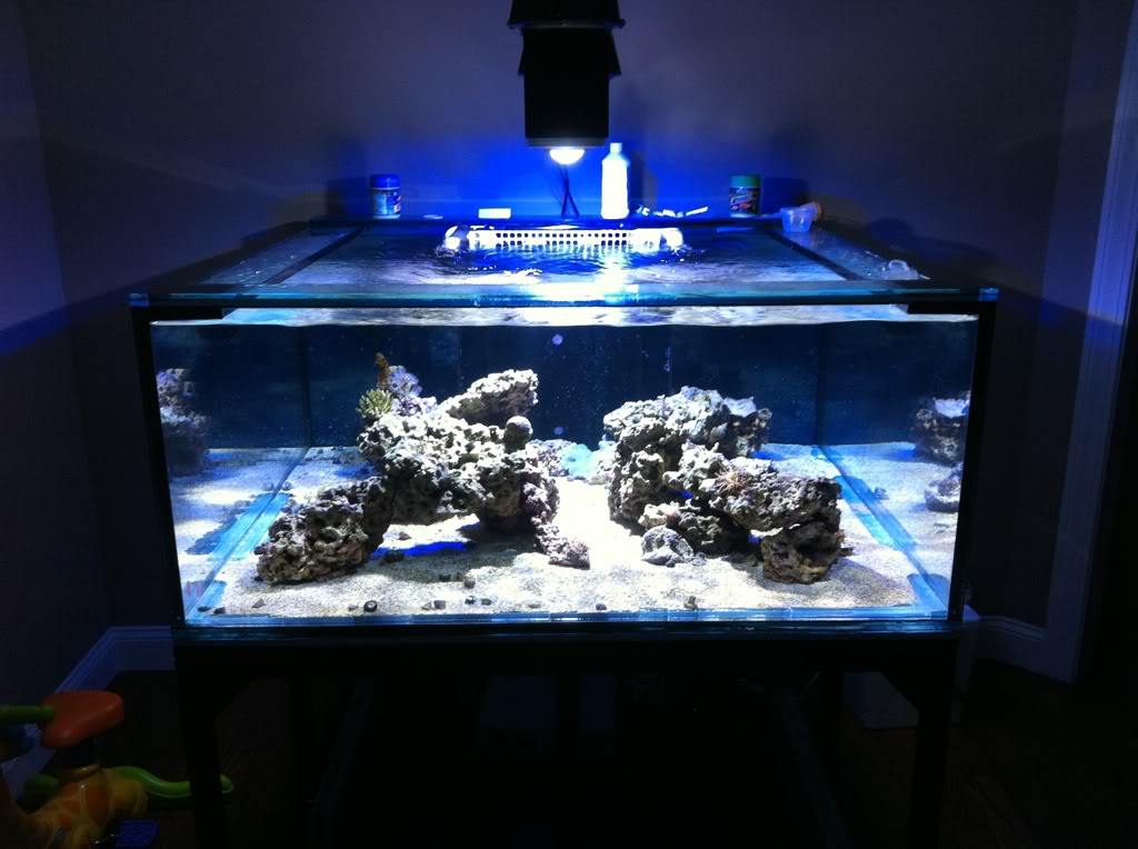 Orphek Dif 100 Reef aquarium led lighting