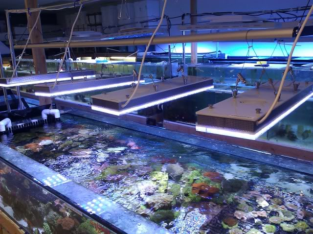 Orphek Reef Aquarium LED belysning