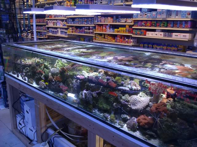 Orphek Reef Aquarium illuminazione a led