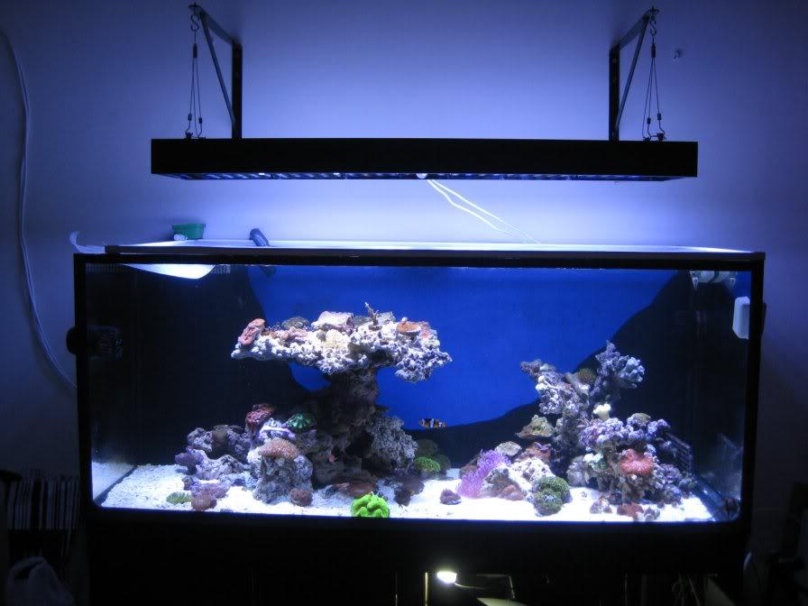 Orphek PR25 arrecife acuario de iluminación LED