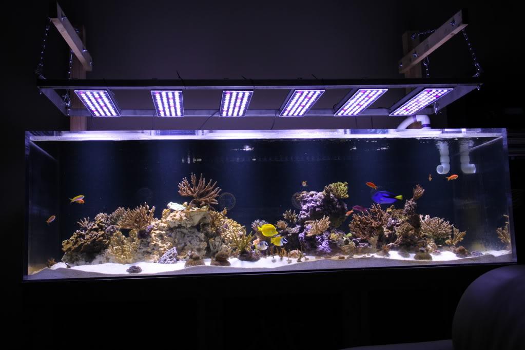 Orphek PR156紫外線
