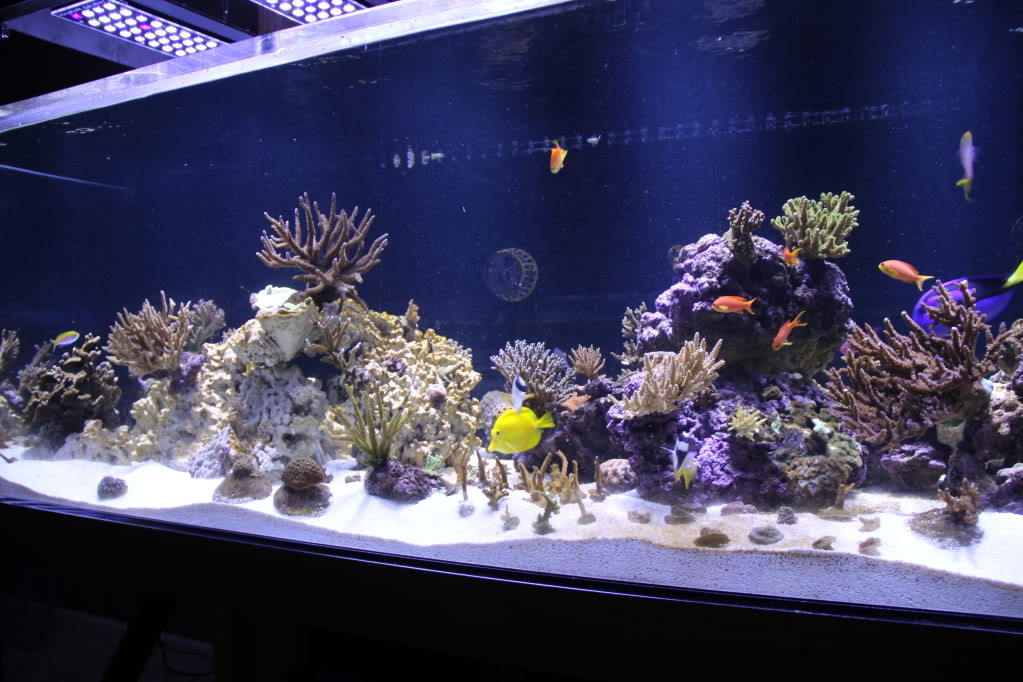 Orphek LED light for Reef aquarium
