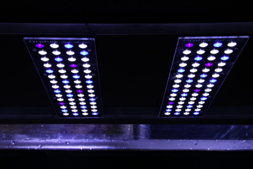 Lampu LED Orphek kanggo Aquarium Reef