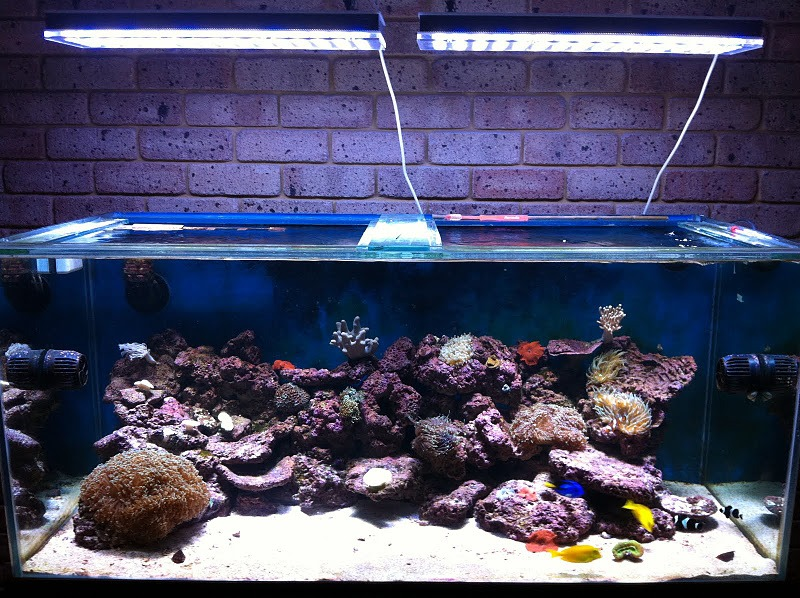 Orphek Reef aquarium led light