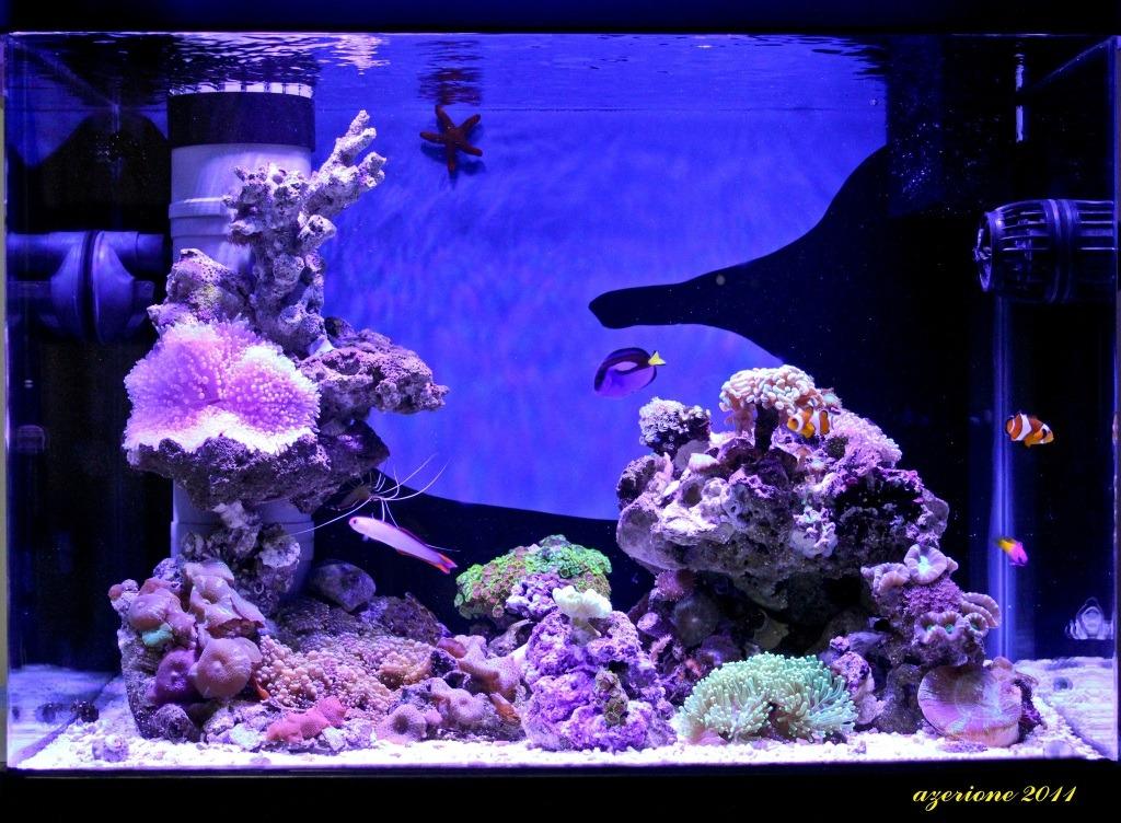 Orphek PR25 rạn san hô hồ cá dẫn chiếu sáng