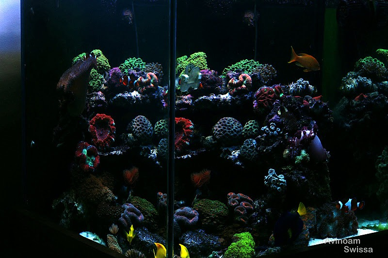 Orphek Reef aquarium LED lighting