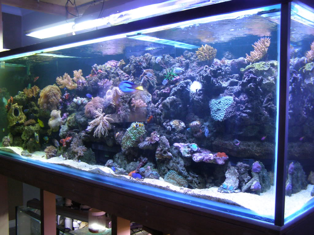 Orphek aquarium led lighting