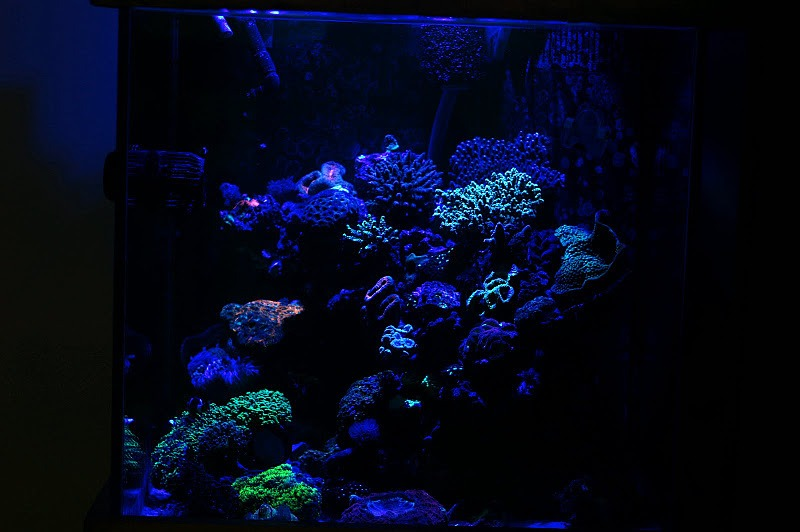 akwarium światła orphek
