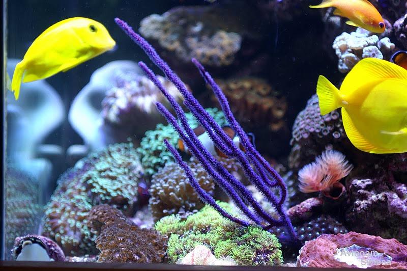 أدى الإضاءة المرجانية orphek