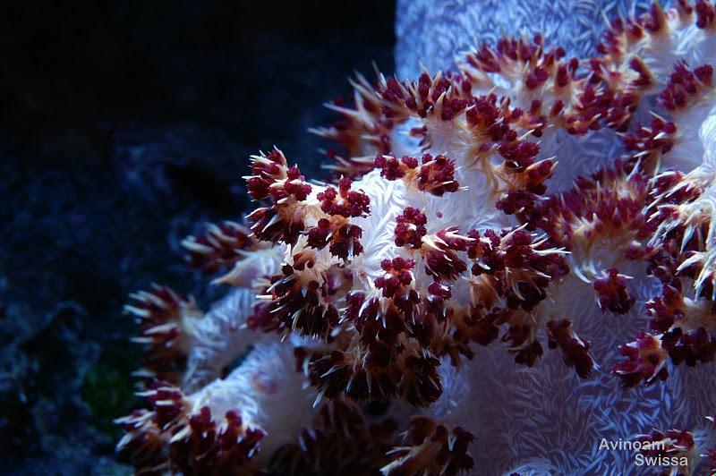 terumbu karang akuarium orphek dipimpin lampu