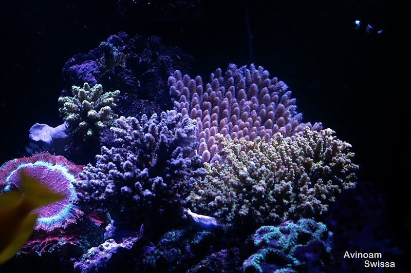 koraller reef akvarium LED lys