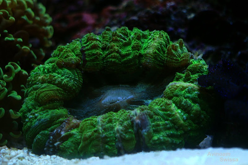 orphek LED-Beleuchtung coral photo