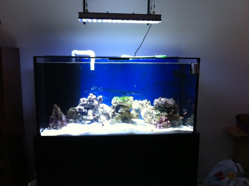 Reef Led Lighting Komentarze i zdjęcia zbiorników Orphek klienta