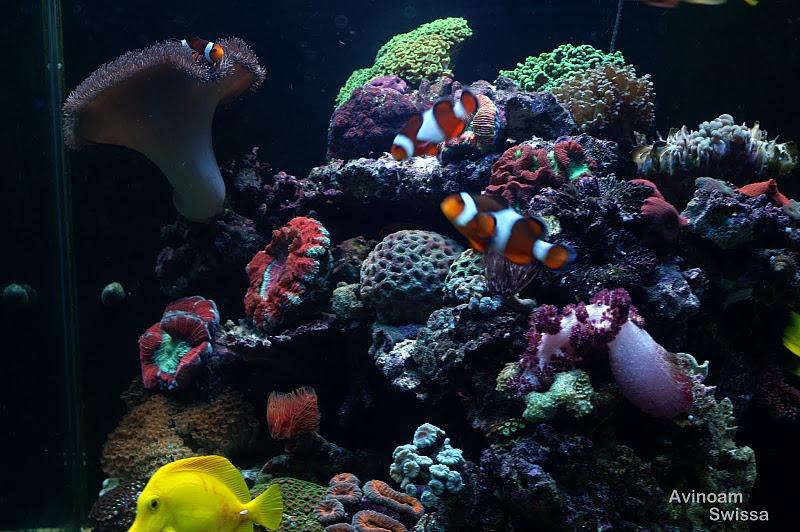 Riff LED-Beleuchtung Korallen Fotos orphek