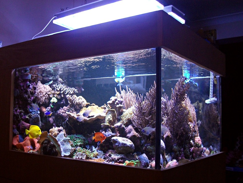 Orphek Reef Aquarium luzes LED