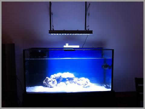 Orphek PR156 rạn san hô hồ cá dẫn chiếu sáng