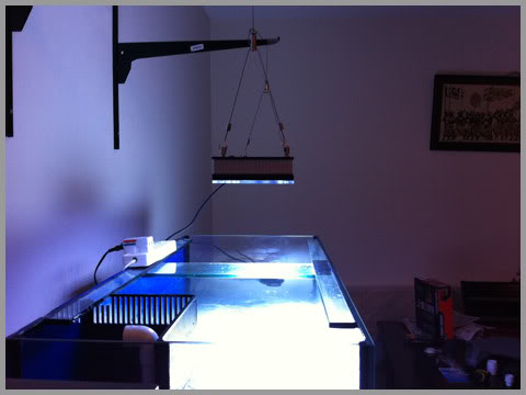 Orphek PR156 reef aquarium led lighting