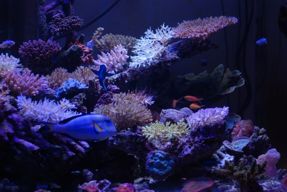 SPS reef serbatoio