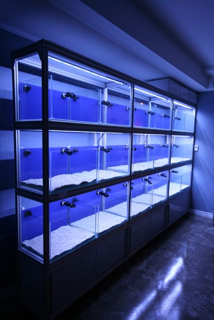reef shop orphek T8 led