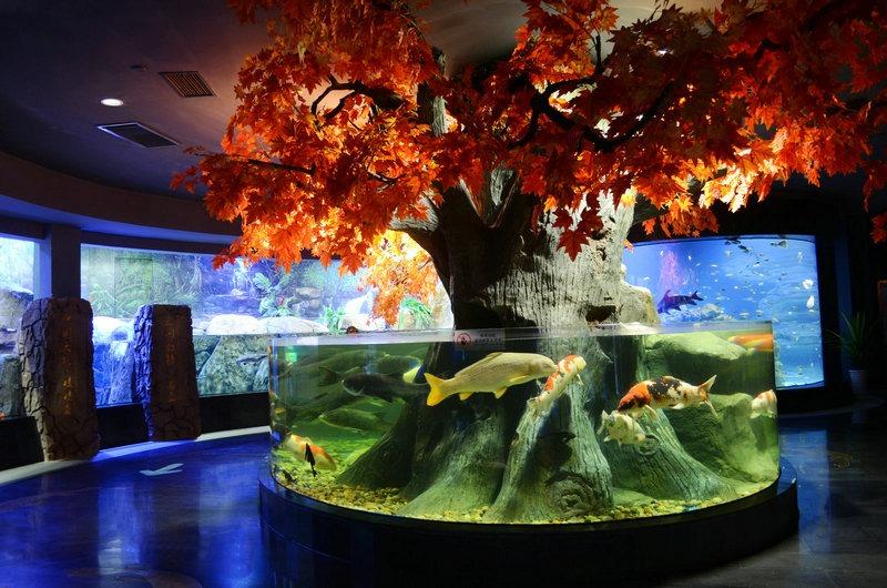 KOI-aquarium-LED-lighting