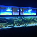 led-lighting-planted-aquarium