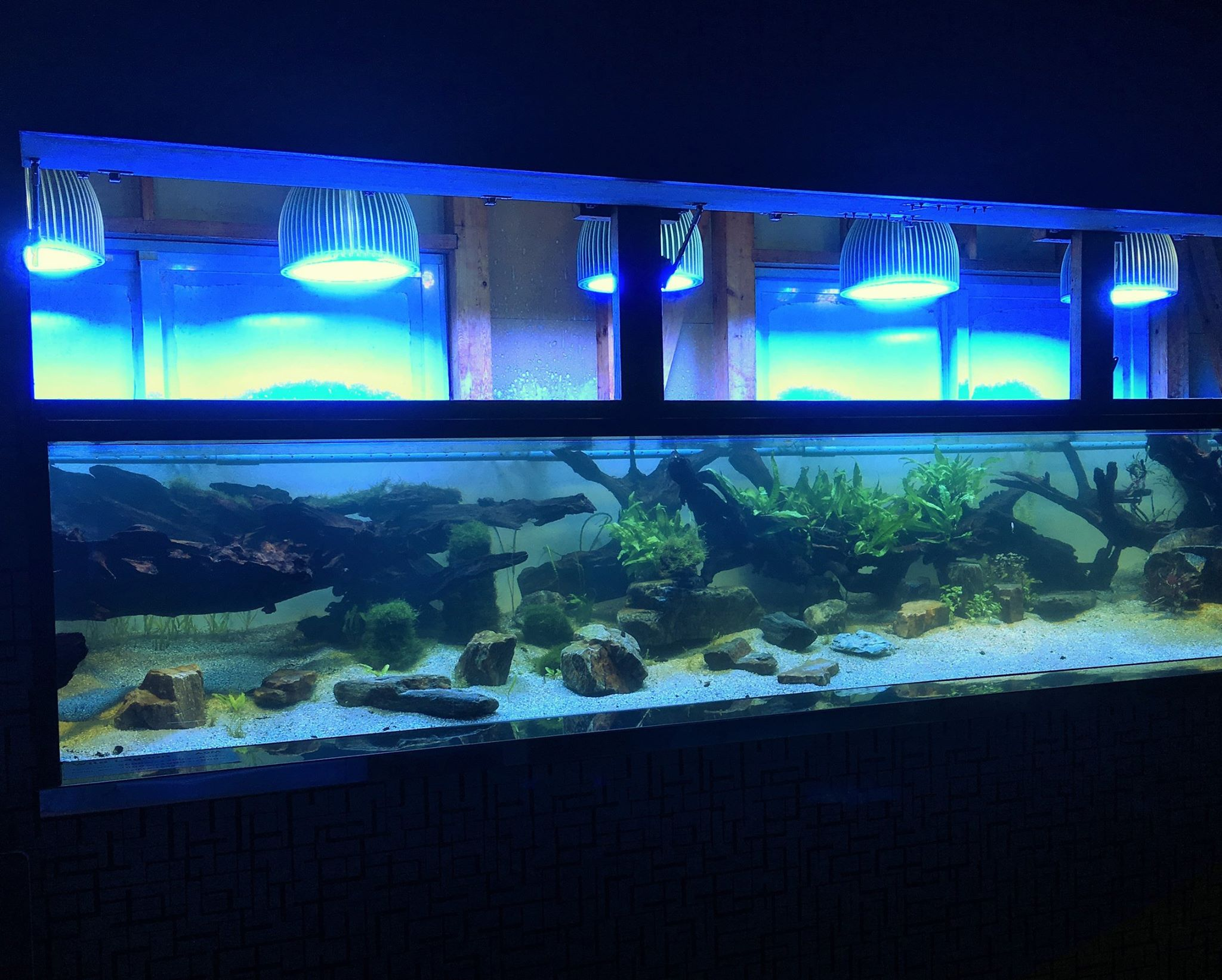 Aquarium led lighting photos meilleurs galerie d 39 clairage led aquarium reef orphek - Eclairage led aquarium ...