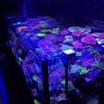 sps-led-aquarium-light