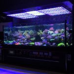 LED-aquariuk-belysning