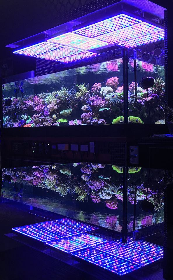 Aquarium Led Lighting Photos Best Reef Aquarium Led