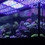 acquario-led-lights