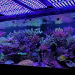 Reef-led-aquarium-lights