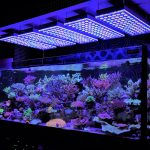 LED-acquario-Lighting