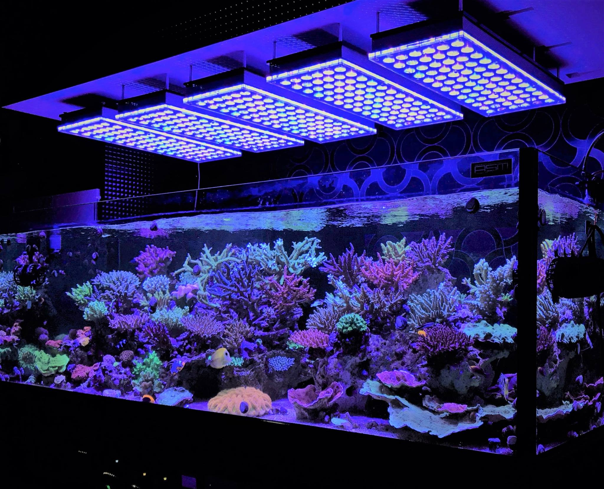 aquarium led lighting photos meilleurs galerie d 39 clairage led aquarium reef orphek. Black Bedroom Furniture Sets. Home Design Ideas
