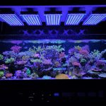 best-aquarium-led-lighting