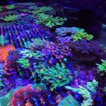 Reef-LED-lights