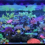 acquario-reef-best-light