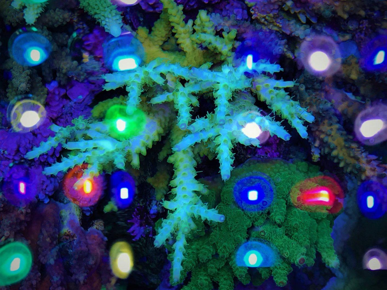 Bestes Lichtspektrum für Korallenwachstum