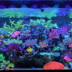 best-reef-acquario
