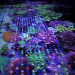 LED-Aquarium-Lighting-Orphek-ljus