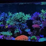 best-reef-aquarium