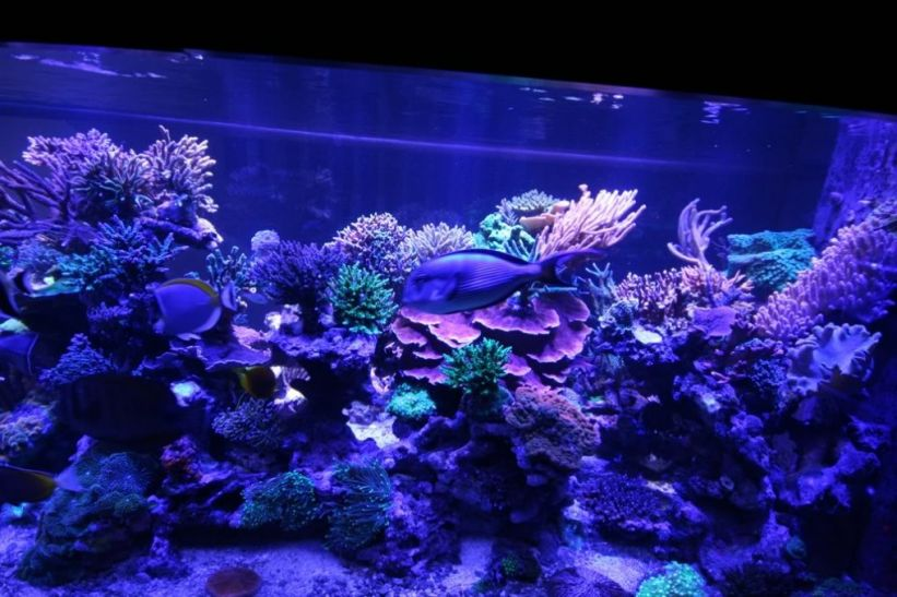 Moon-LIGHT-LED-Aquarium